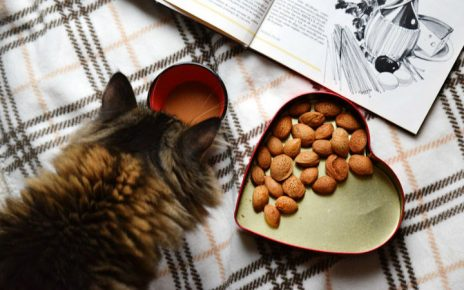 Cinco consejos para alimentar a tu gato