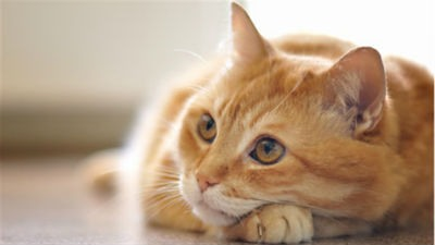 Consejos si tienes alergia a los gatos