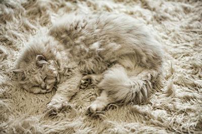 Gato en la alfombra
