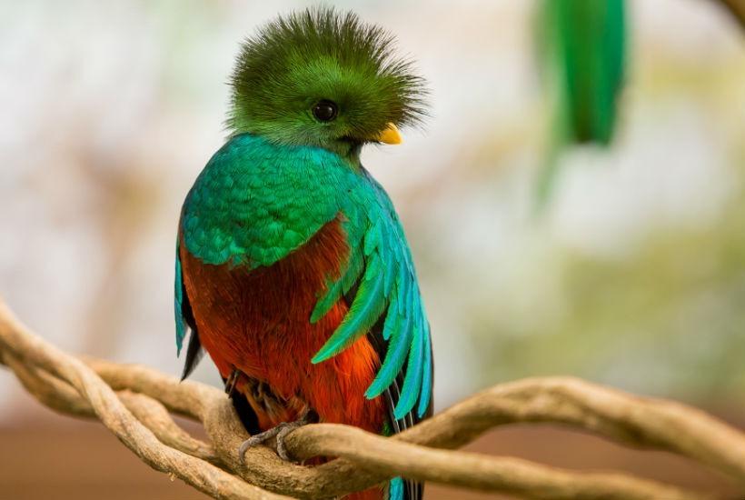 Las 10 aves mas exoticas del mundo