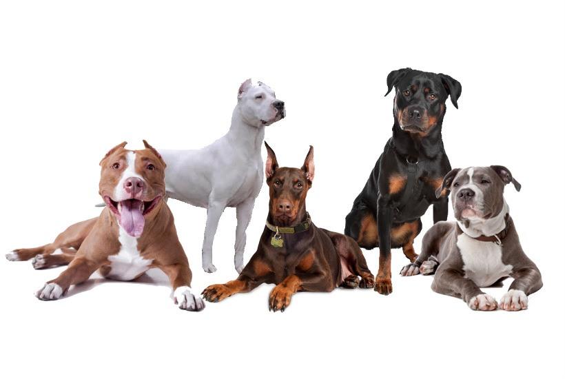 Las razas de perro mas peligrosas del mundo