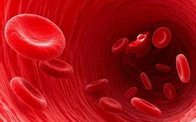 Analisis de Sangre HCM