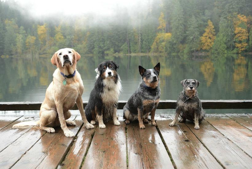 Las mejores marcas de piensos para perros guia completa for Mejor pienso para perros