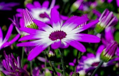 Cuidados regulares de un jardin