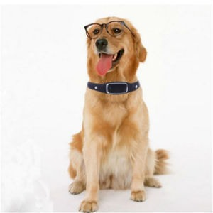 Localizador para perros