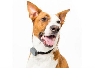 Localizadores para perros