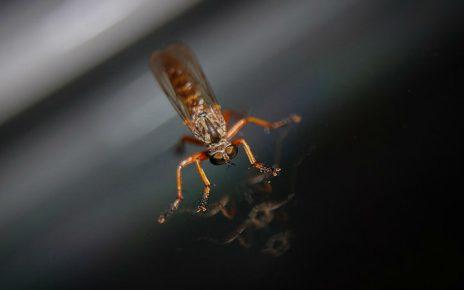 Evitar las picaduras de mosquitos
