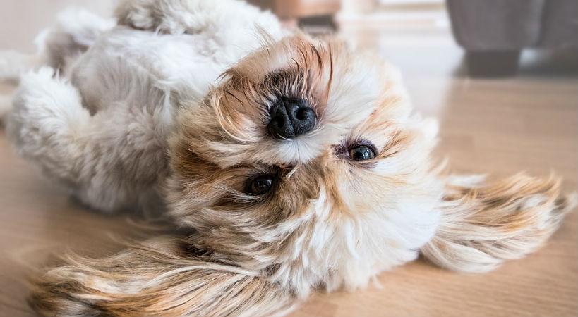 Como garantizar el bienestar de tu mascota