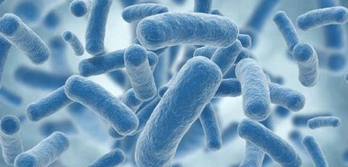 Probioticos indispensables