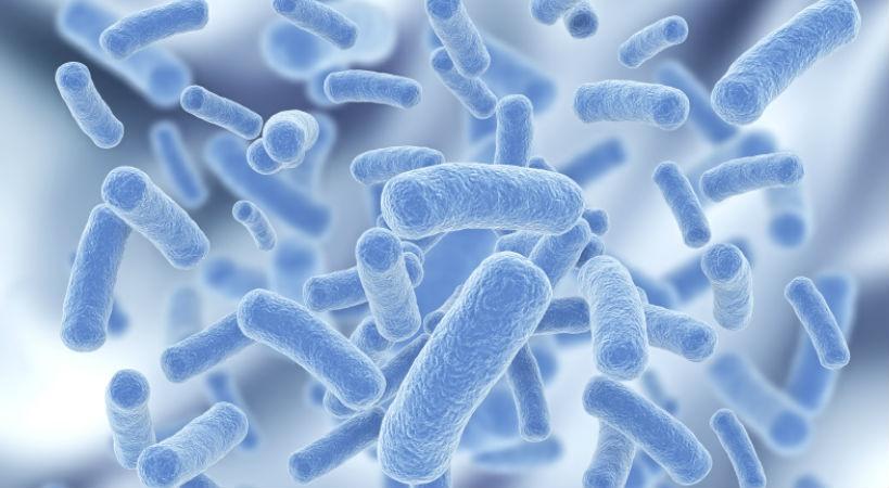 Probioticos son indispensables para el organismo