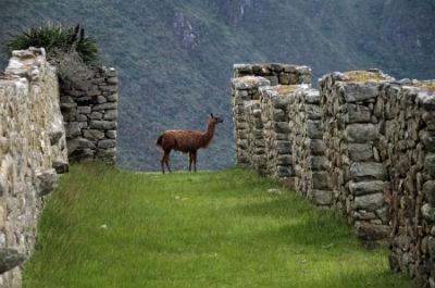 Descubre la ciudad de Cusco