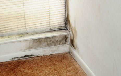 Como eliminar el moho en casa