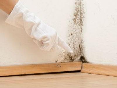 Los mejores productos para eliminar el moho en casa