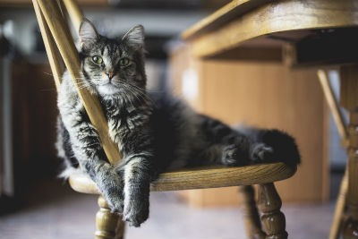 Alimentar a tu gato de forma saludable