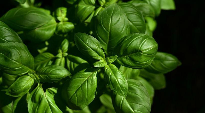 La importancia de los antioxidantes para nuestro organismo