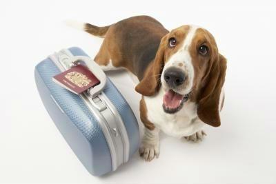 Requisitos veterinarios para viajar