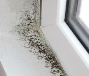 Efectos en la salud de tener humedad en tu casa