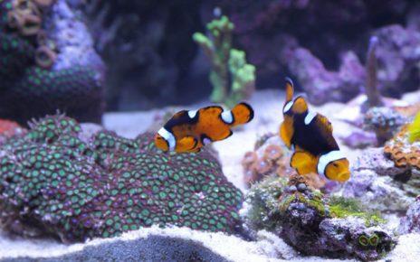 Peces comunes en un acuario