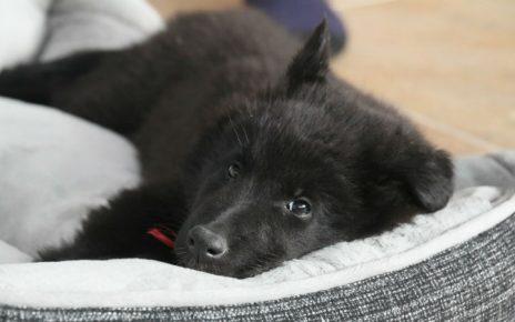 Beneficios de una cama para perros