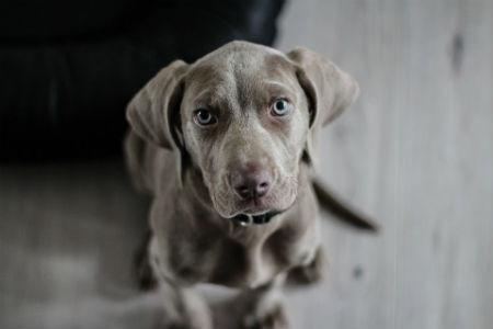 Entender el lenguaje canino