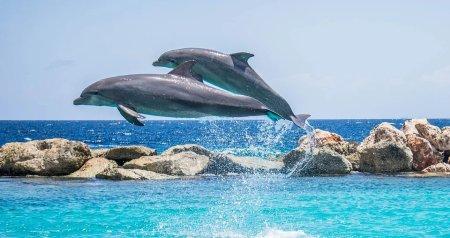 nado con delfines en Puerto Vallarta