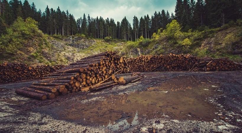 Terrible problema de la deforestación